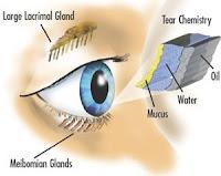 Pelicula lagrimal del ojo
