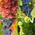 Composición del vino y del mosto