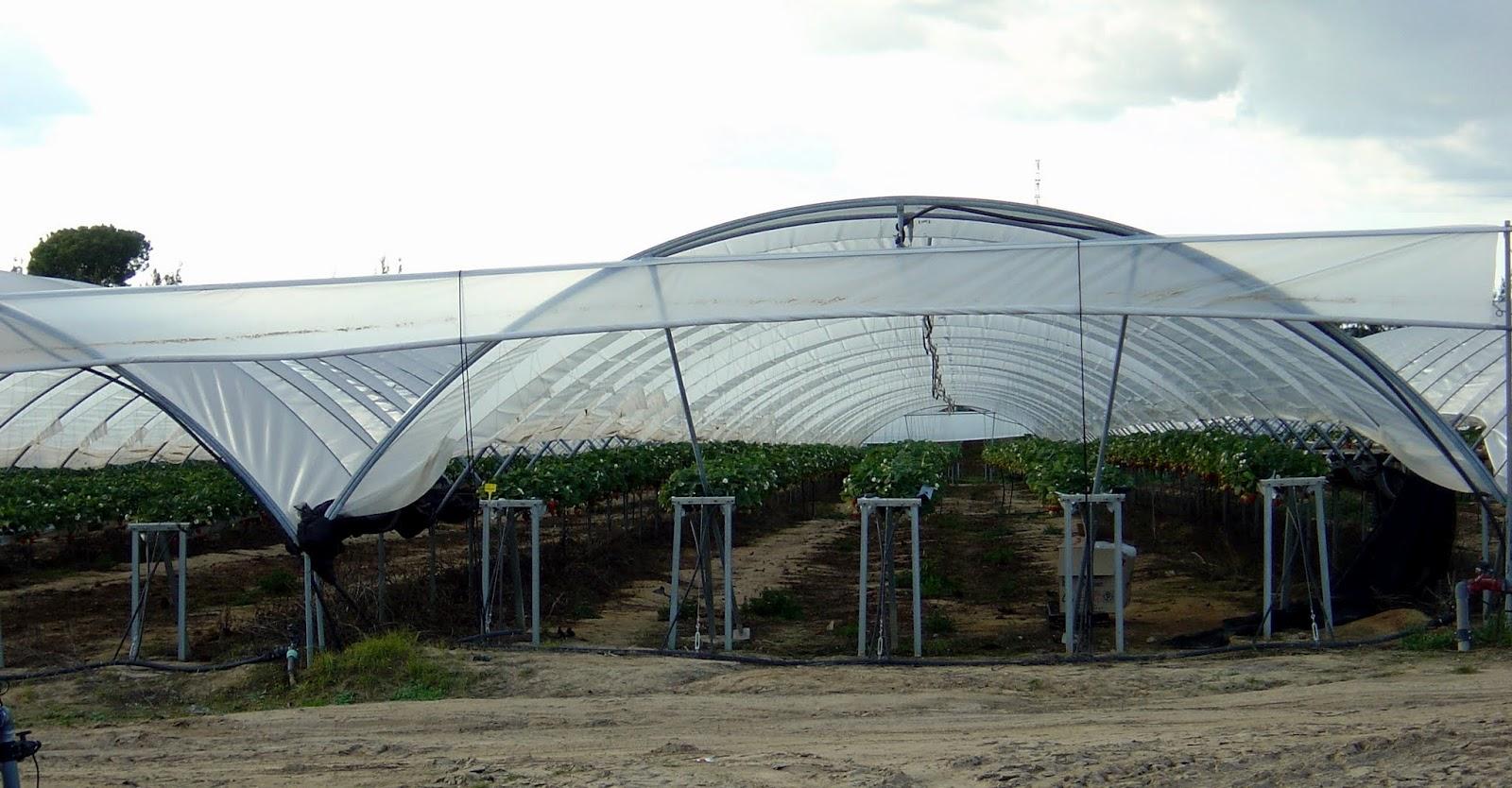 Thm tecnolog as de la horticultura mediterr nea un Diseno de invernaderos pdf