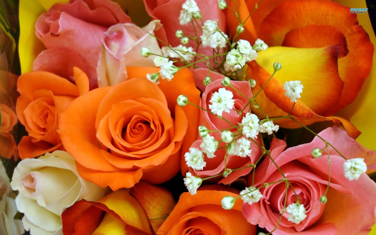 http://2.bp.blogspot.com/-uOX7jld_g_s/UNAsVijdrdI/AAAAAAABBPc/7OCaayWMpBU/s1600/bm-image-717425.jpeg