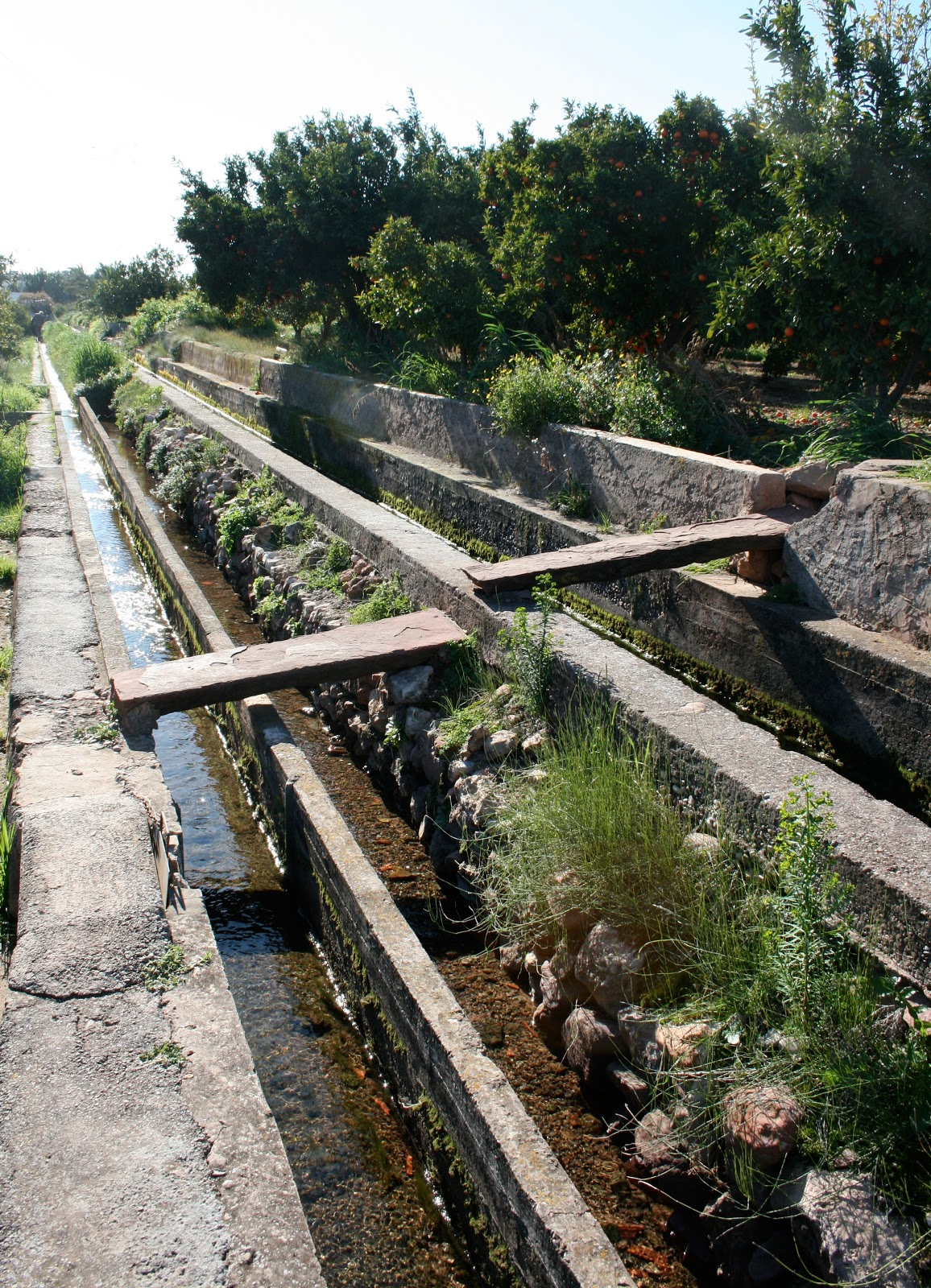 gestion agua, huerta