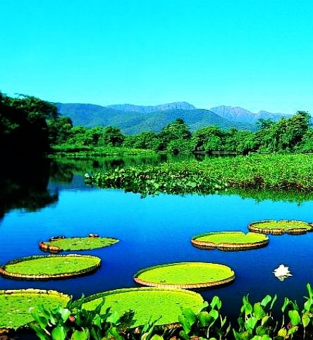 World Travel Agency travel the World RTW -family activities Budget Travel Pantanal in Brazil