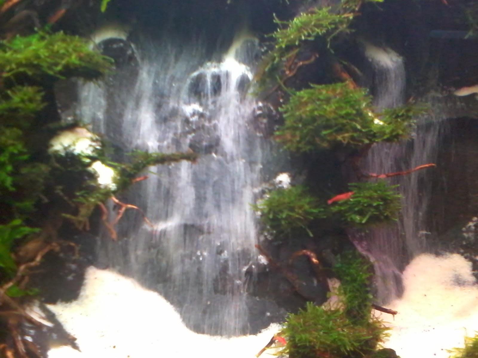 jenis - jenis ikan hias dan tanaman aquascape|zonaquascape ...