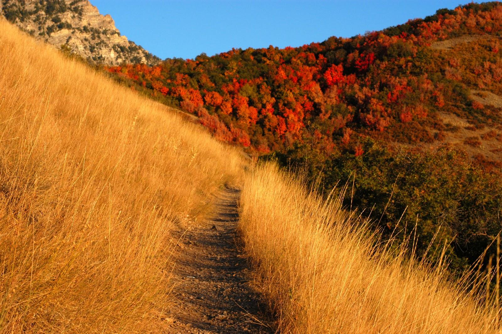 http://2.bp.blogspot.com/-uPIfiSG2YUc/UIk-a0mj6xI/AAAAAAAABLA/7t_cm-Dh2sI/s1600/Autumn_mountain_trail.jpg