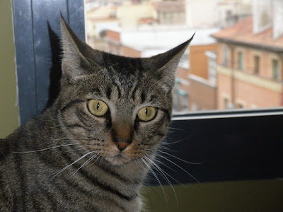 Darek the Cat