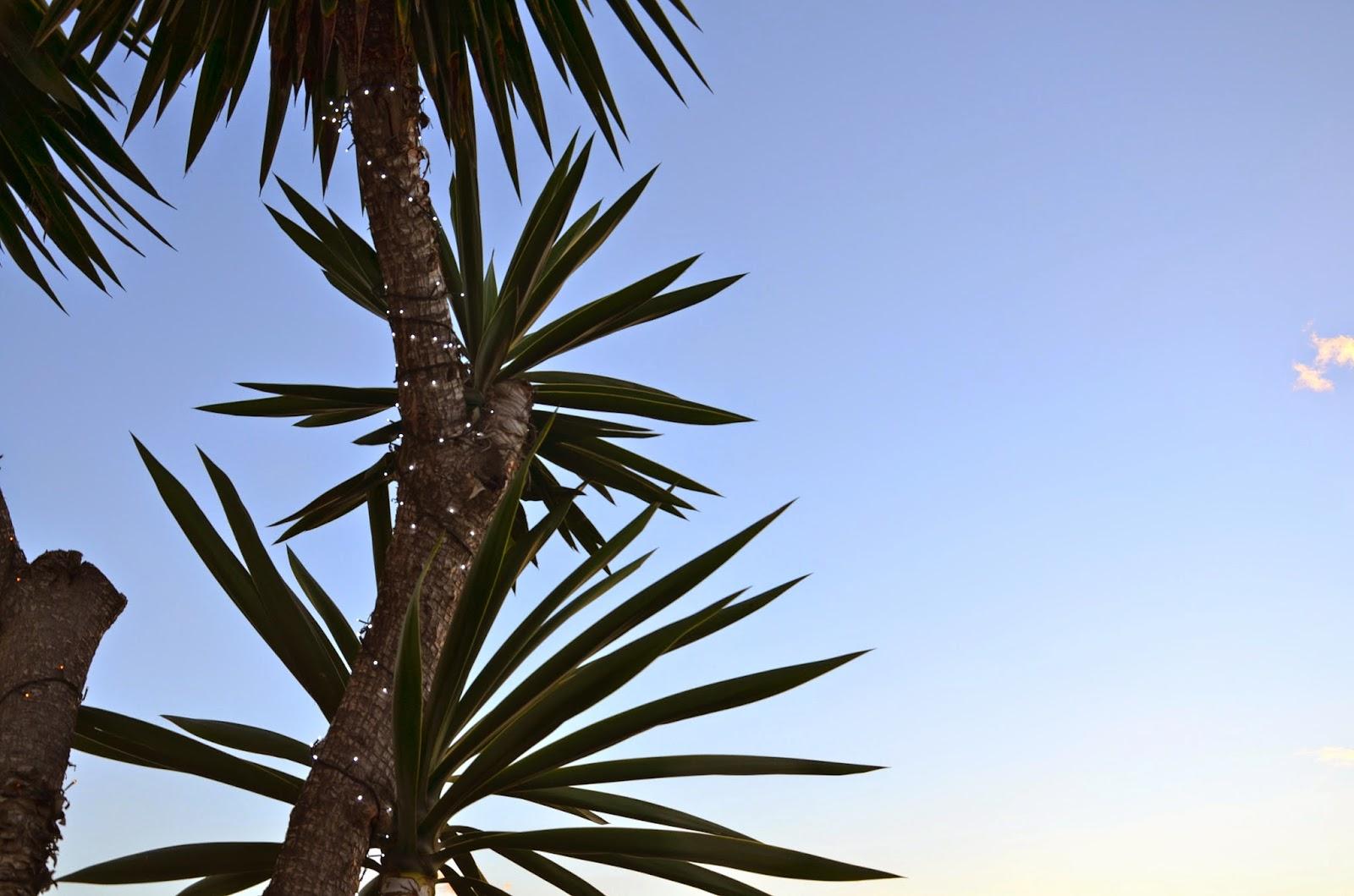 Palm Tree Puerto Banus JustMelKate