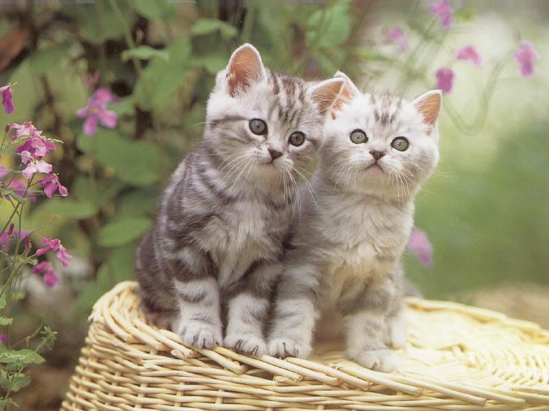 funny kittens wallpapers - photo #14