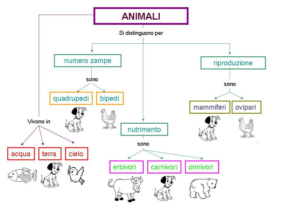 Famoso CLASSE A COLORI: Scienze: gli animali BQ24