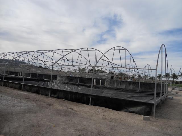 Estanques de geomembrana bioentorno s c for Engorda de tilapia en estanques rusticos