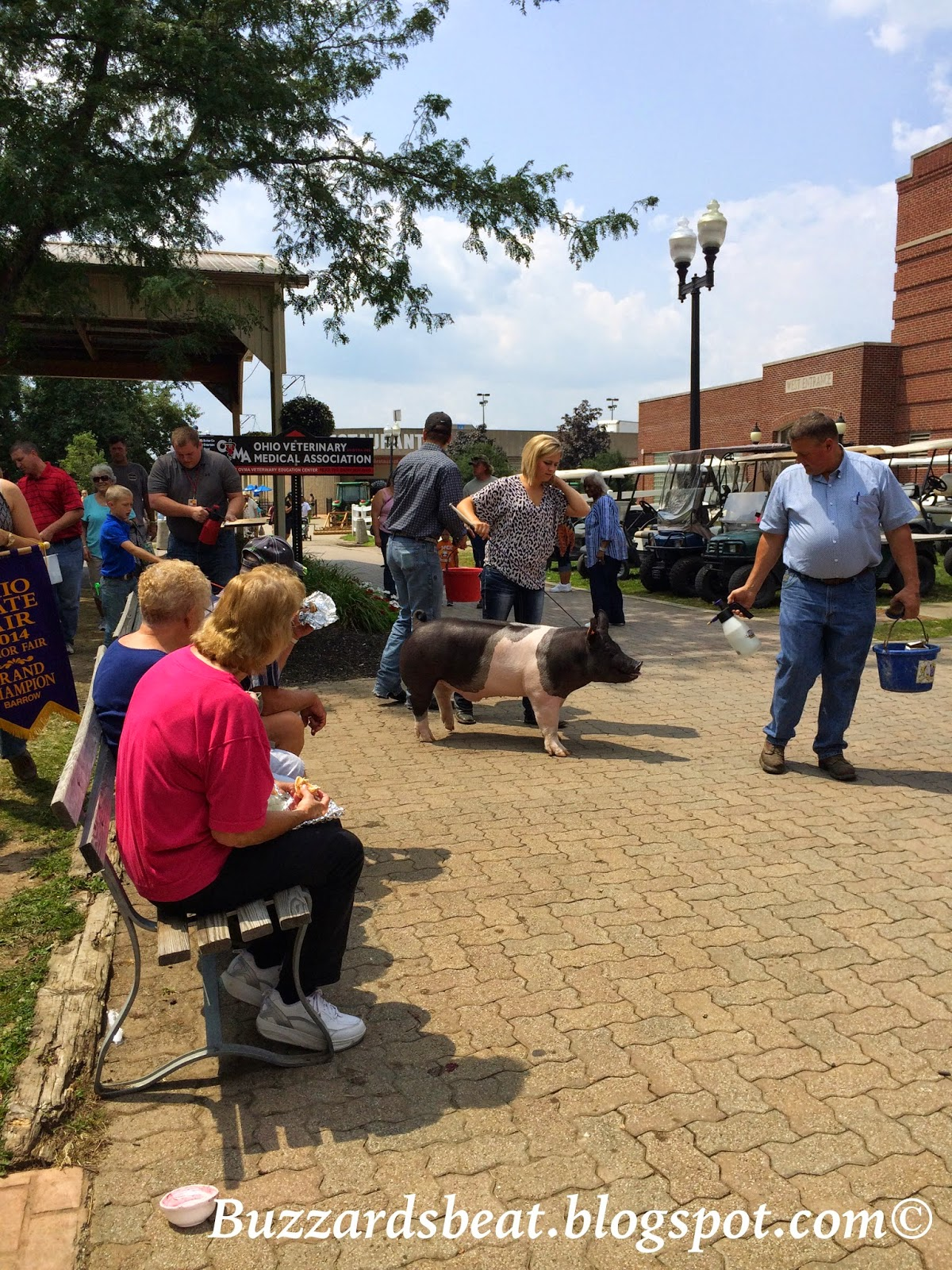 Walking a pig through a large crowd requires patience