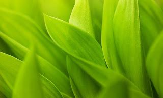 Macro Wallpaper Green Leaves Stems Leaflets Beautiful HD Wallpaper
