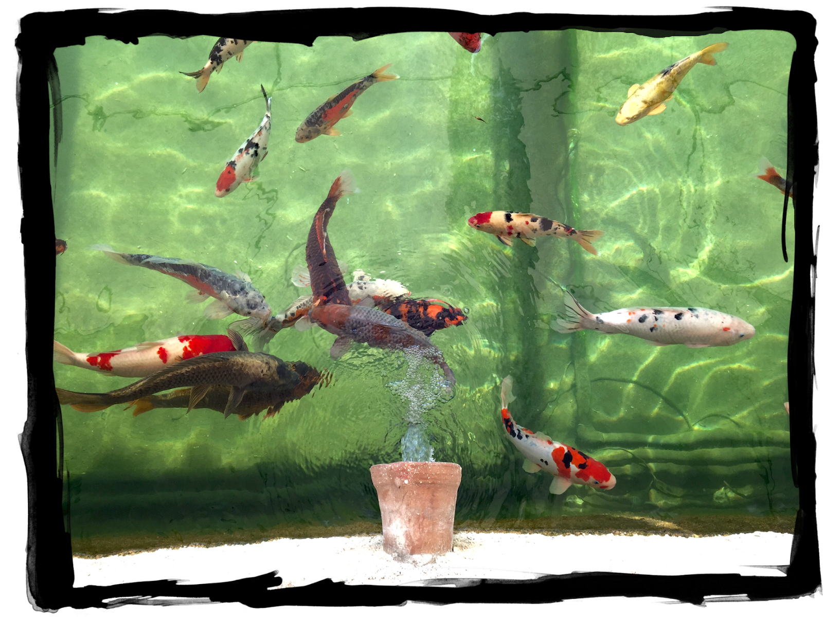 Have some decorum my adventures in provence part 3 for Koi fish environment