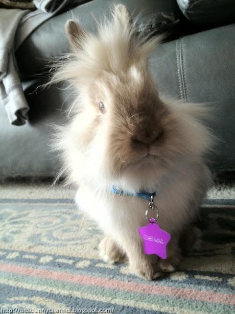 Funny fluffy bunny.