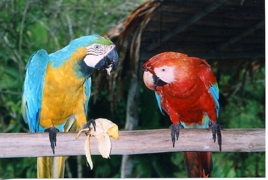 Names of Tropical Birds Parrots British Birds Names of