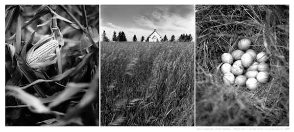 advanced photography journal  diptychs and triptychs