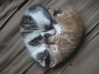 kittens making a heart
