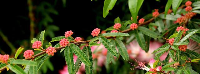 Imagem de planta com folhas verdes e flores rosa