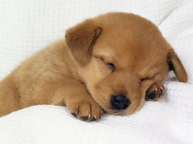 Adorable sleeping dog picture