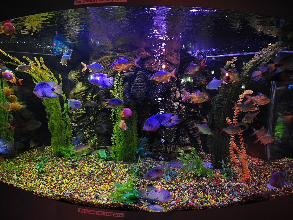 Hd wallpapers for 3d aquarium wallpaper for bedroom