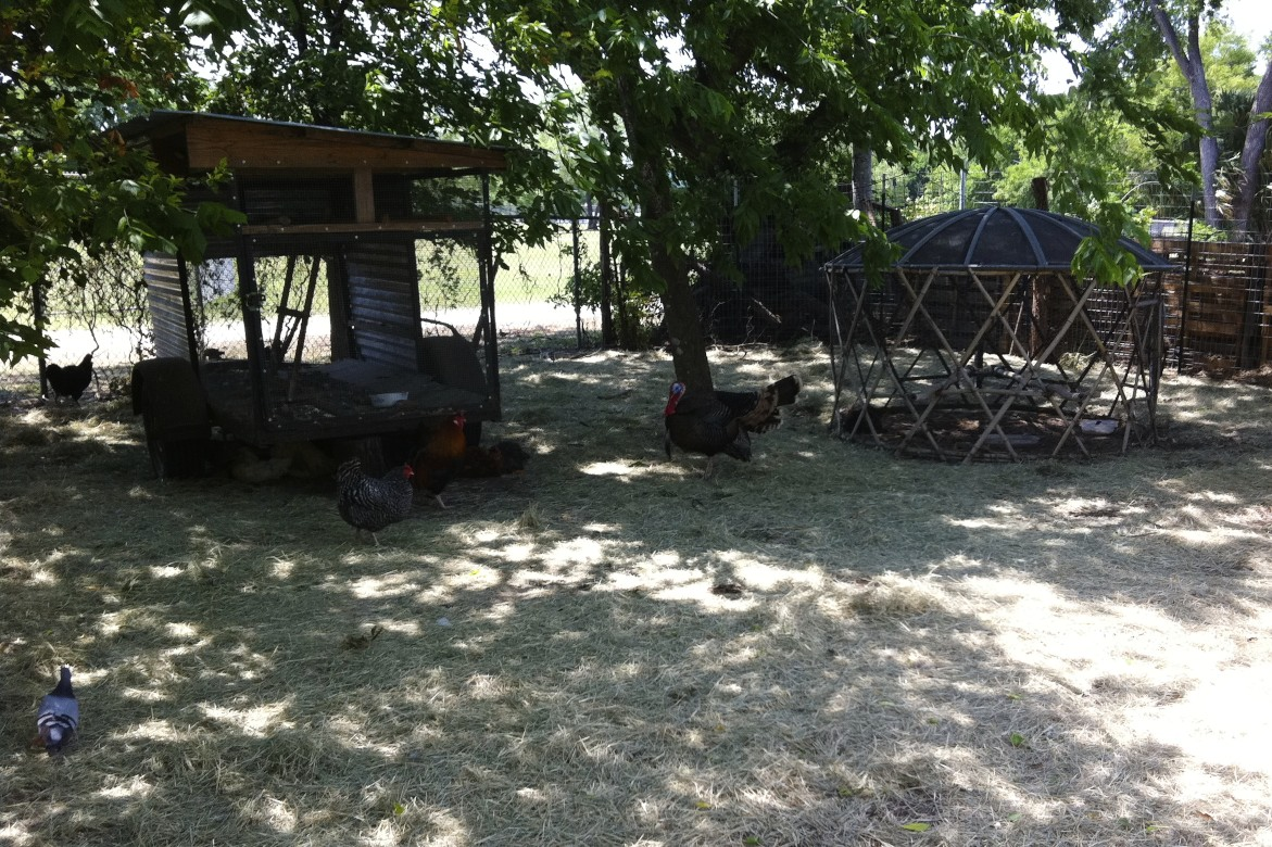 austin farm tour from our garden