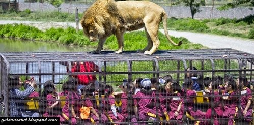 Pelik Zoo Ini Mengurung Pengunjung Untuk Umpan Binatang Buas Untuk Keluar