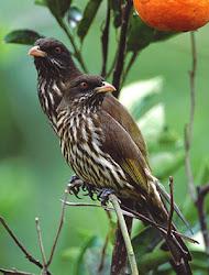 protejamos nuestras aves endémicas.