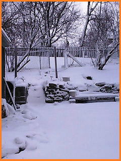 Large blanket of snow covering the yard.