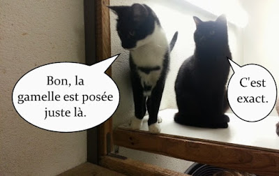 2 copains chats qui discutent.