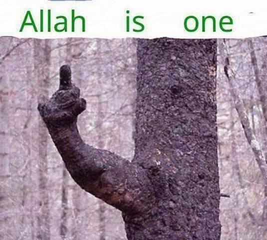 Miracles Of Allah 2014 Islam Miracles: Allah ...