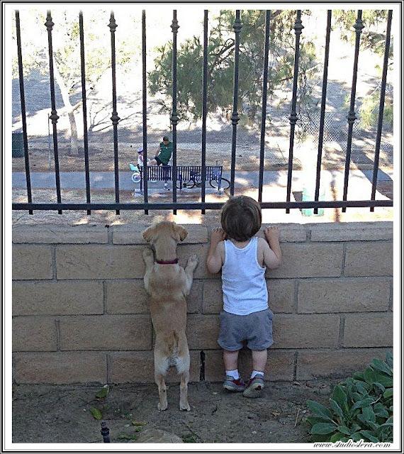 studioslera.com perro niño espias