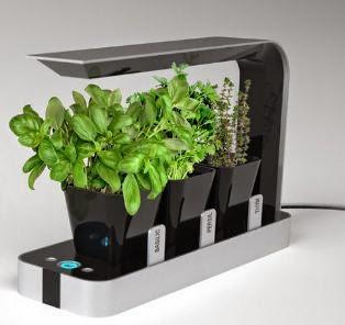 Arredo In: Vasi particolari per piante aromatiche in cucina