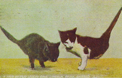 1909 Postcard, A Pair of Two Legged Cats, Lincoln Park, Chicago,Ill
