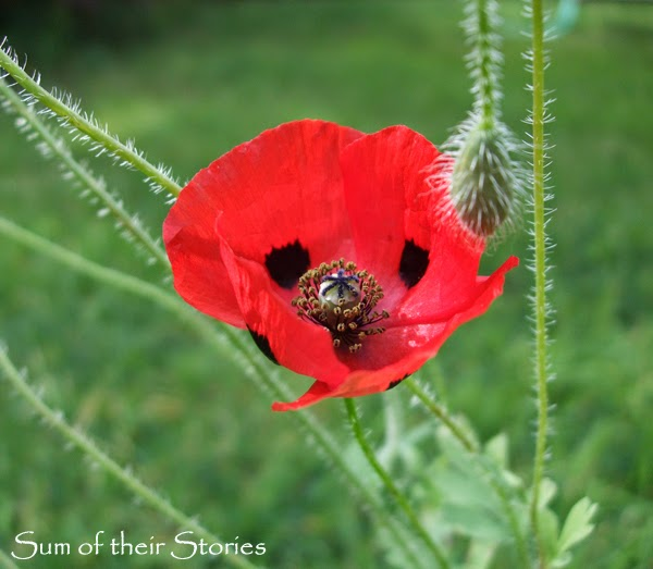 World War 1 commemorative poppy