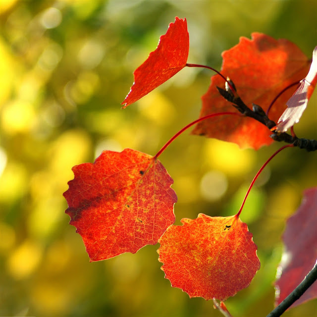 iPad Wallpaper - Red Autumn Leaves