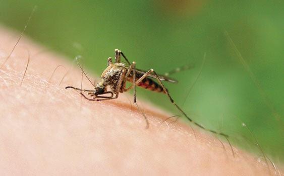 sivrisinek, sivrisinek neden ısırır, sivrisinek ısırığı