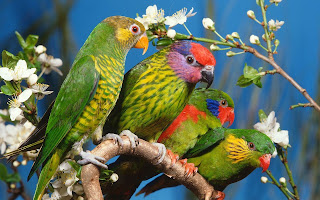 Most Dashing And Beautiful Parrot Wallpapers Free Downlaod