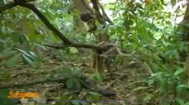 Mayat Ditemui Dengan Kepala Tergantung Di Pokok