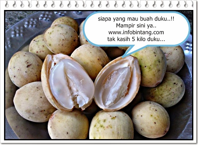 manfaat batang,daun dan buah duku