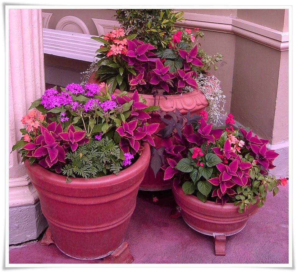 Savjeti za aranžiranje cvijeća u saksijama i žardinjerama - Moj Vrt Cvijeća