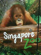 Orang utan - Singapore Zoo