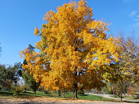 THE COLORS TURN AT MARGAUX FARM