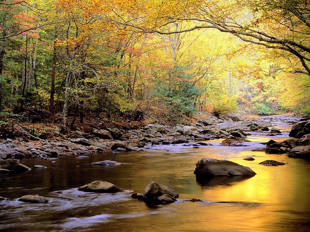 http://2.bp.blogspot.com/-uSpb-RurE4o/Tj4oHaZ7s_I/AAAAAAAAAA4/ewopaS9sVxg/s1600/golden-river-wallpaper.jpg