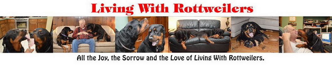 Living with Rottweilers