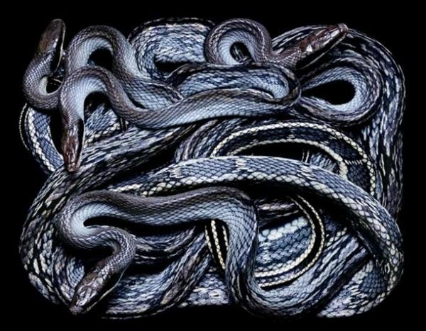 http://2.bp.blogspot.com/-uStMqHwtA1Y/TpbQCk65E8I/AAAAAAAADBk/EIeeGddHjSc/s1600/256716%252Cxcitefun-fascinating-snakes-12.jpg