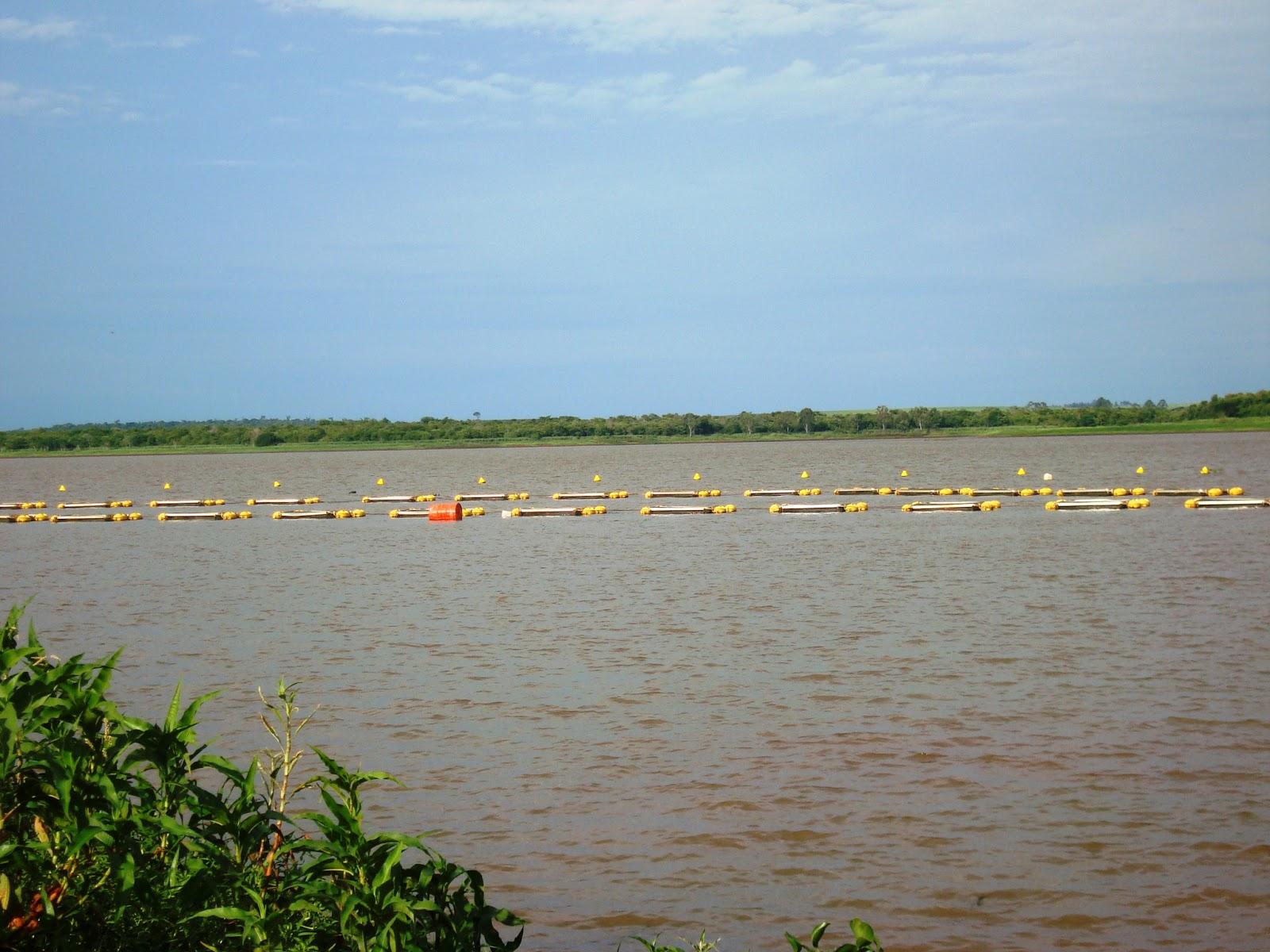Cria peixe tilapicultura avalia o do custo de produ o for Tanques para cria de tilapia