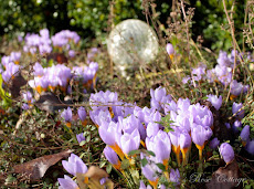 the Crocus are Up...