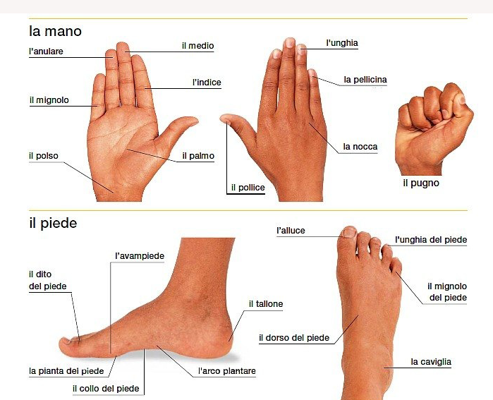 картинки для изучения итальянского