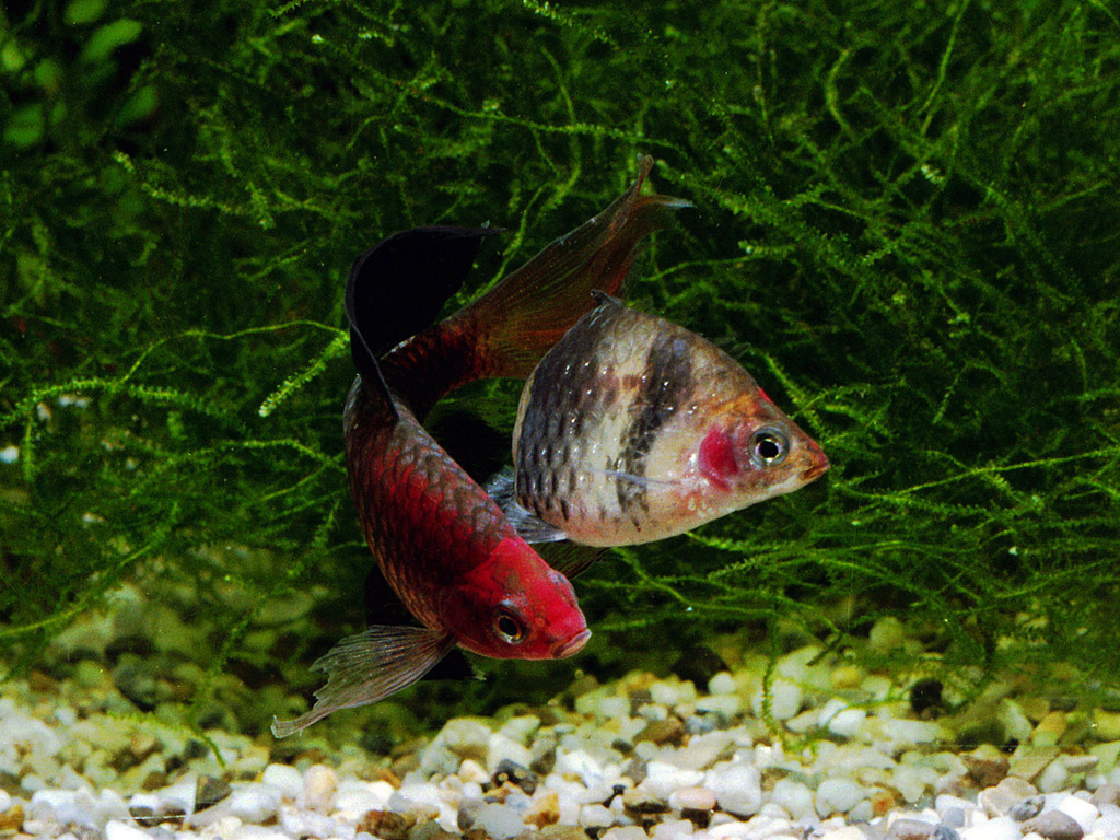freshwater aquarium fish information 2017 fish tank