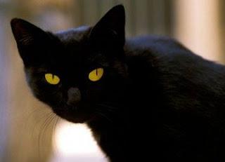 Majikan Meninggal, Kucing Dapat Warisan Rp 141 Miliar