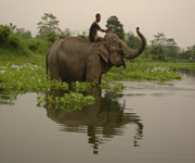 Manas Wildlife Sanctuary Assam India